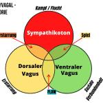 Dein Nervensystem: Werde vitaler und sozialer mithilfe der Polyvagaltheorie 10