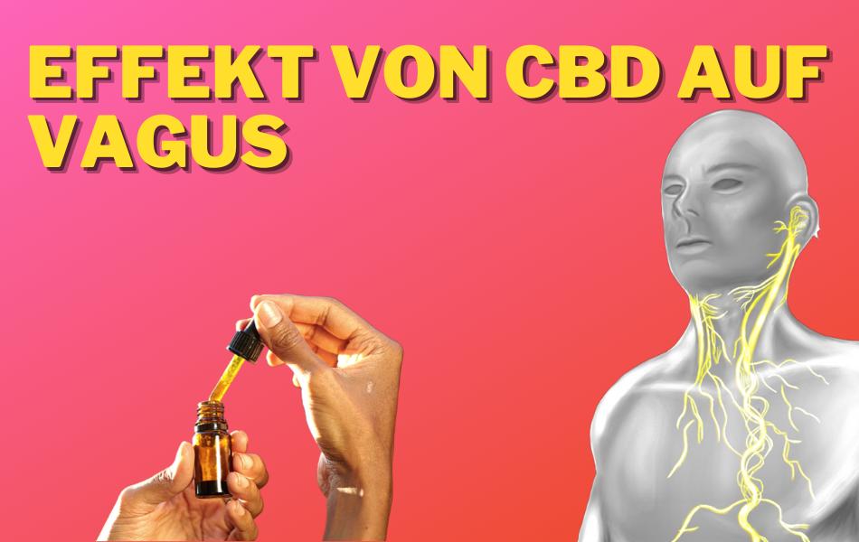 Aktivierung des Vagus Nerven mit CBD 1