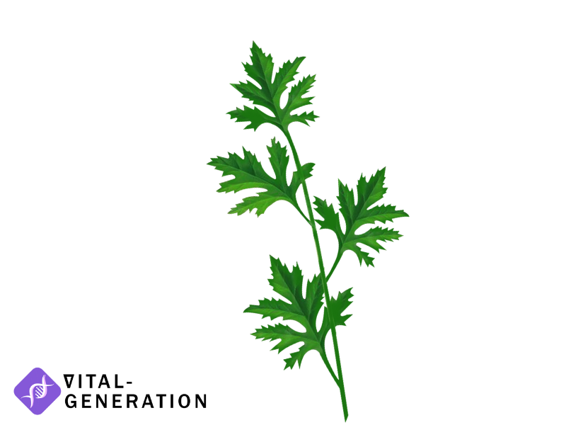Beifuß pflanze