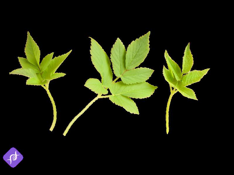 Heilkräuter Anbauen: Die 7 pflegeleichtesten Heilkräuter im eigenen Garten anbauen 6
