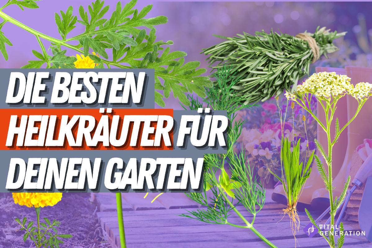 Heilkräuter Anbauen: Die 7 pflegeleichtesten Heilkräuter im eigenen Garten anbauen 1
