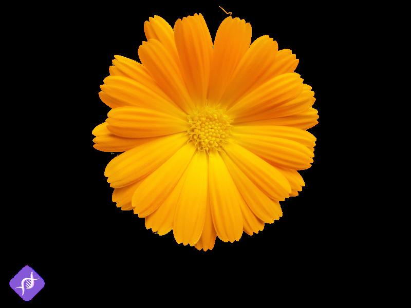 Heilkräuter Anbauen: Die 7 pflegeleichtesten Heilkräuter im eigenen Garten anbauen 8