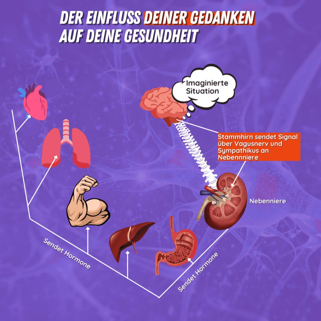 Dein Nervensystem: Werde vitaler und sozialer mithilfe der Polyvagaltheorie 5