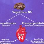 Dein Nervensystem: Werde vitaler und sozialer mithilfe der Polyvagaltheorie 11