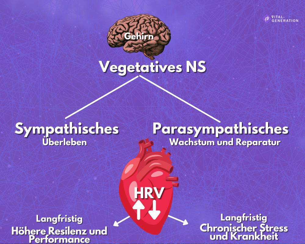 Dein Nervensystem: Werde vitaler und sozialer mithilfe der Polyvagaltheorie 7